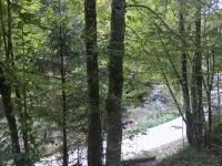 Österreich Alte Buchenwälder der Karpaten Kopfbild